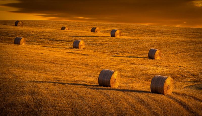 رانت رانتجویی رانتخواری زمین کشاورزی