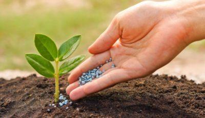 افزایش محصولات کشاورزی با استفاده از کودهای زیستی