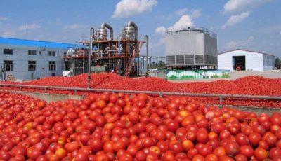 پارادوکس گوجهفرنگی