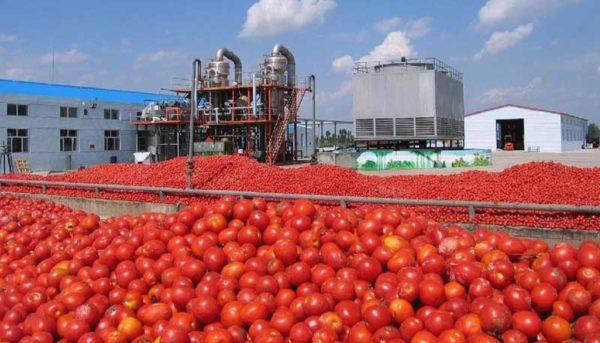 صادرات گوجه تا اطلاع ثانوی ممنوع شد