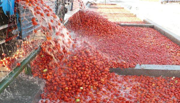 تورم ۲۲۷ درصدی رب گوجهفرنگی طی یکسال(اینفوگرافیک)