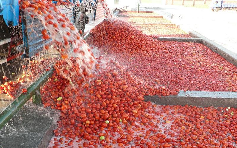 تورم ۲۲۷ درصدی رب گوجهفرنگی طی یکسال (اینفوگرافیک)