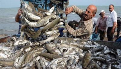 صید ماهیان استخوانی در خزر آغاز شد