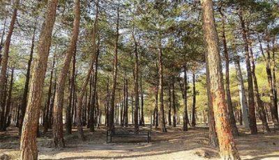 تعطیلی پارکها و جنگلها در روز طبیعت/ پارکها پیش از بازگشایی ضدعفونی می شوند