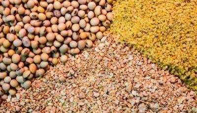 صنایع خوراک دام، طیور و آبزیان مشمول تحریم نیست