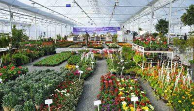 قیمت انواع گل در بازار چند است؟