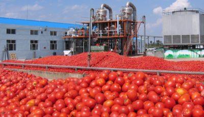 تورم رب گوجه فرنگی در آبان به ۱۰۰ درصد رسید