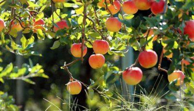 رشد تورم تولیدکننده باغداری و دامداری در تابستان