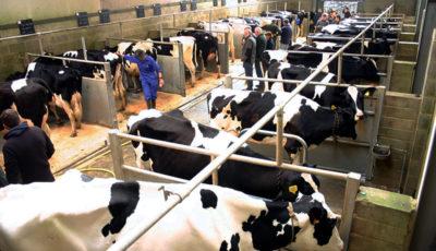 گرانی تولید شیر در تابستانی که گذشت