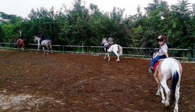 اسبهای پونی در زمین بازی استارتاپها/ از دل مزرعه و اسبسواری تا صفحات اینستاگرام