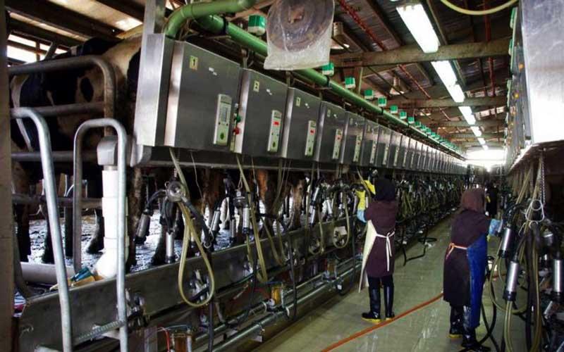 رشد ۷ تا ۸ درصدی تولید سالانه شیر خام