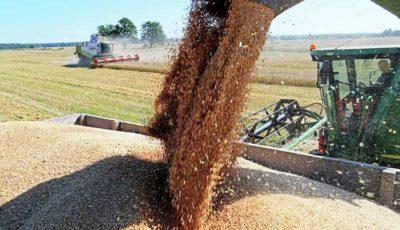 هشدار نسبت به خروج قاچاقی گندم از کشور