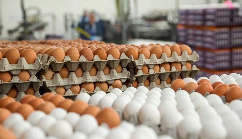 قیمت تخم مرغ بهار سال بعد ارزان میشود