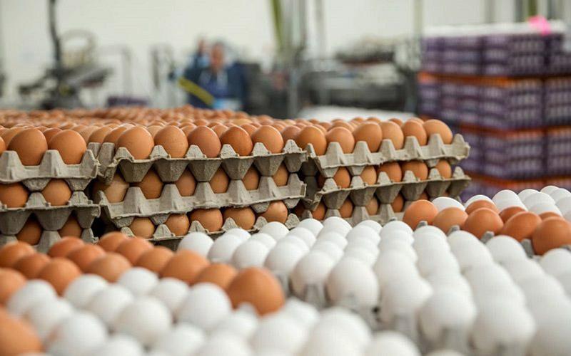 صادرات تخم مرغ فاسد به عراق
