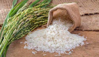 قرارداد عراق با آمریکا برای واردات گندم و برنج