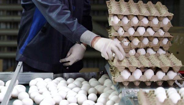 کاهش قیمت تخم مرغ در بازار ادامه دارد