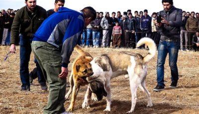 شرطبندی به شرط خون/ بازاری که از آزار حیوانات سود میکند