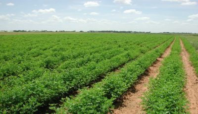 آستان قدس ۲۲ هزار هکتار زمین زراعی را مدیریت میکند