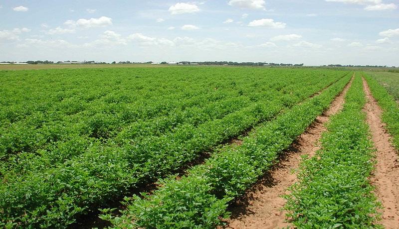 آستان قدس 22 هزار هکتار زمین زراعی را مدیریت میکند