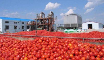 ماراتن گوجه و ربگوجه بر سر افزایش قیمت (نمودار)