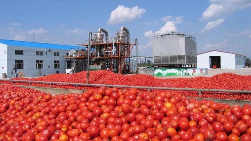 کورس گوجه و پیاز در پیست تورم ماهانه / تورم یک ساله رب گوجه به 248 درصد رسید
