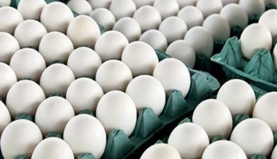 کمبود تخم مرغ نداریم / وضعیت بازار عادی است