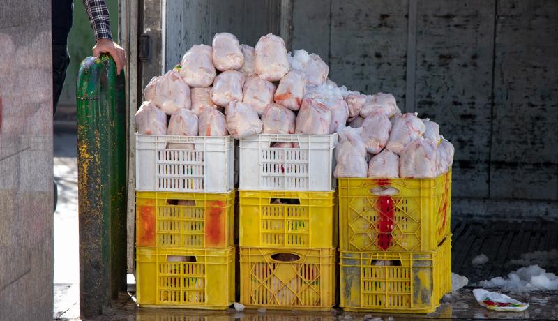 افزایش قیمت مرغ در بهمن ۹۷