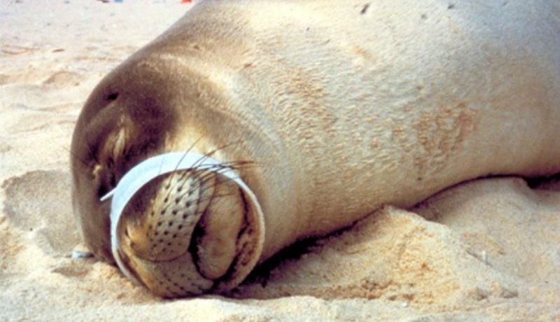 آمارهای وحشتناک از بحران پلاستیک / روزی که اقیانوسها بیشتر از آب، پلاستیک خواهند داشت (اینفوگرافیک)