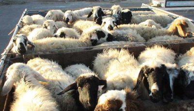 کاهش ۱۳ درصدی قیمت دام زنده / آخرین نرخ گوشت در بازار