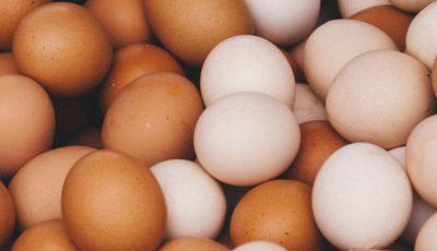 بزرگترین صادرکنندگان تخم مرغ در جهان