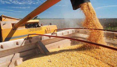 قیمت جهانی گندم و ذرت کاهش یافت