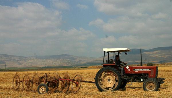 قیمت گندم برای مصارف صنعتی تعیین شد