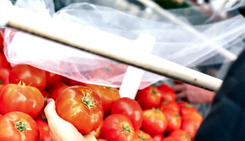 گوجهفروشی لسانجلس