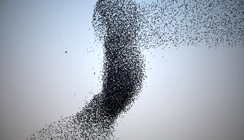 دسته پرندگان