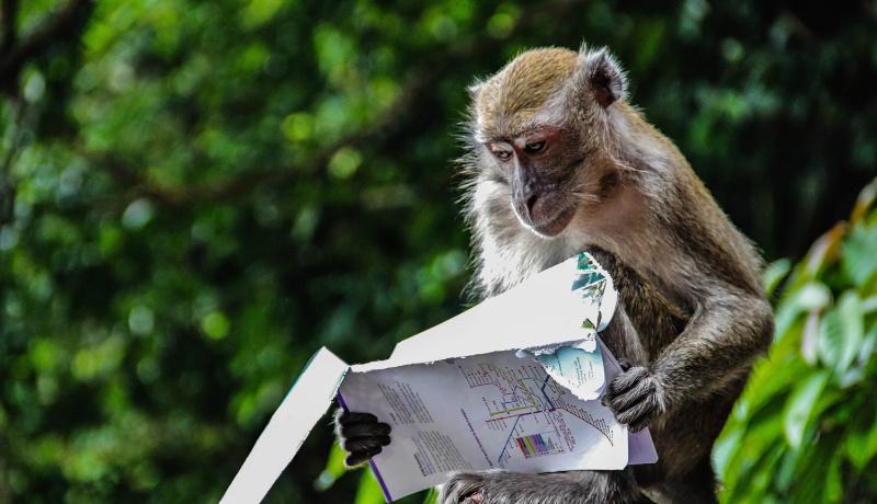 میمون کتاب میخواند