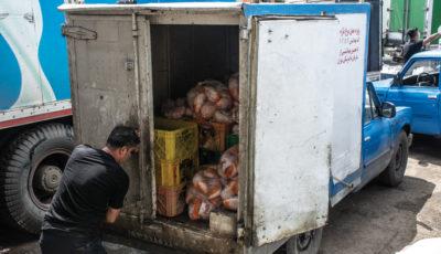 چرا مرغهای بازار جمعآوری شدند؟