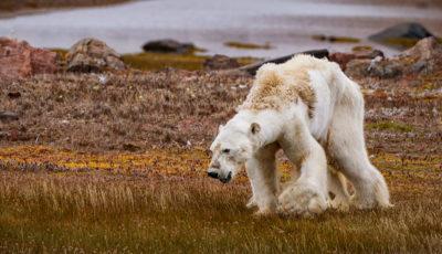گرمشدن کره زمین، خطرناکتر از چیزی که فکر میکنیم!