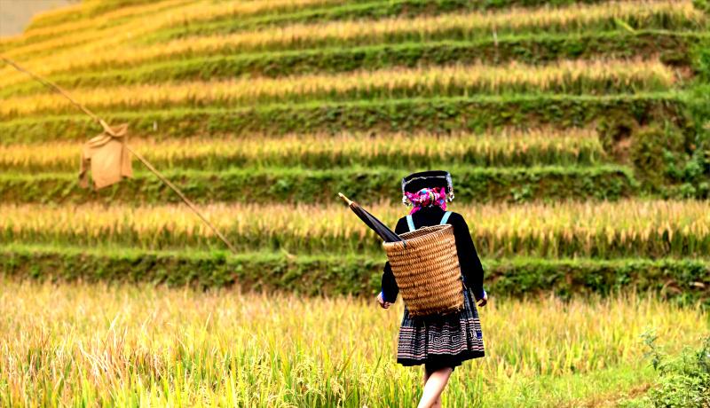 دختربچه در مزرعه