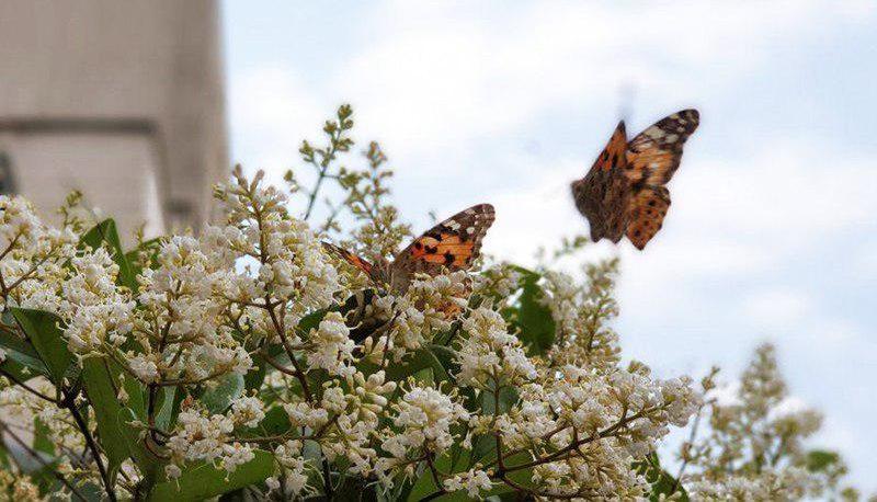 پروانهها در شهر: اقتصاد حشرهای
