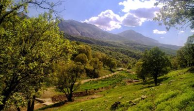 کاشت تریاک در جنگلهای فارس