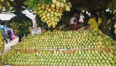 ۲ میلیون کیلو مازاد تولید انبه در فیلیپین / دولت چه چالشهایی برای افزایش صادرات دارد؟