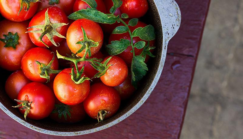 گوجه فرنگی محصولات کشاورزی