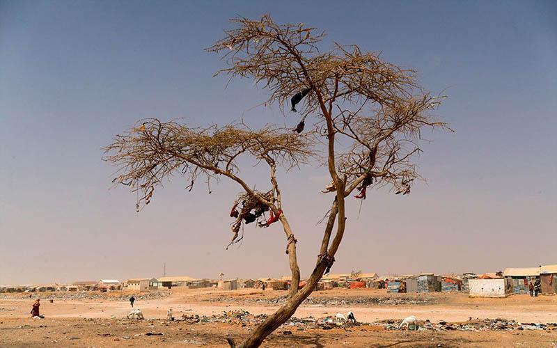 قحطی و گرسنگی در چه کشورهایی هرگز رخ نمیدهد؟