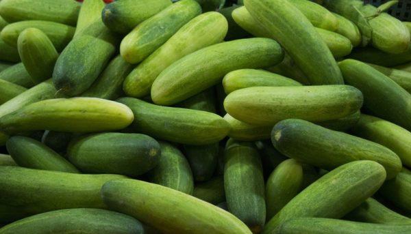 خیار ۲۰۰ تومانی در دست کشاورزان / سونامی گوجهفرنگی و بادمجان در راه است