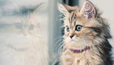 آموزش زبان بدن گربهها