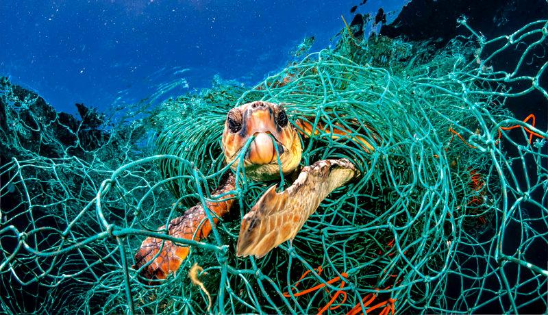 لاکپشت دریایی نخهای ماهیگیری