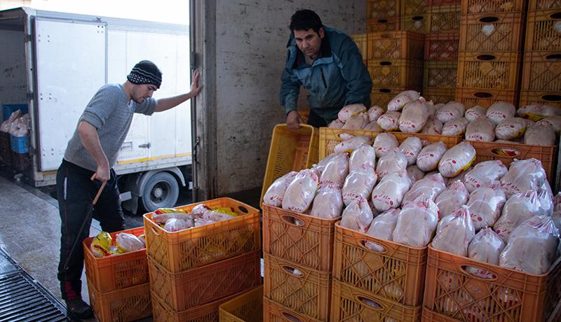 تداوم روند ثبات قیمت مرغ در بازار