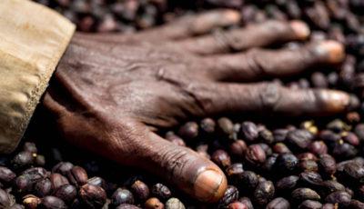 قهوه تلخ من از گریه غمانگیزتر است؛ آنچه از تولید قهوه نمیدانید