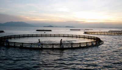 پرورشدهندگان ماهی در قفس تسهیلات ارزی و ریالی میگیرند