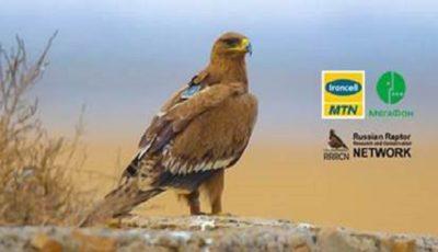 ایرانسل هزینهای بابت رومینگ موبایل عقابها دریافت نمیکند